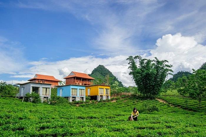 homestay moc chau arena village