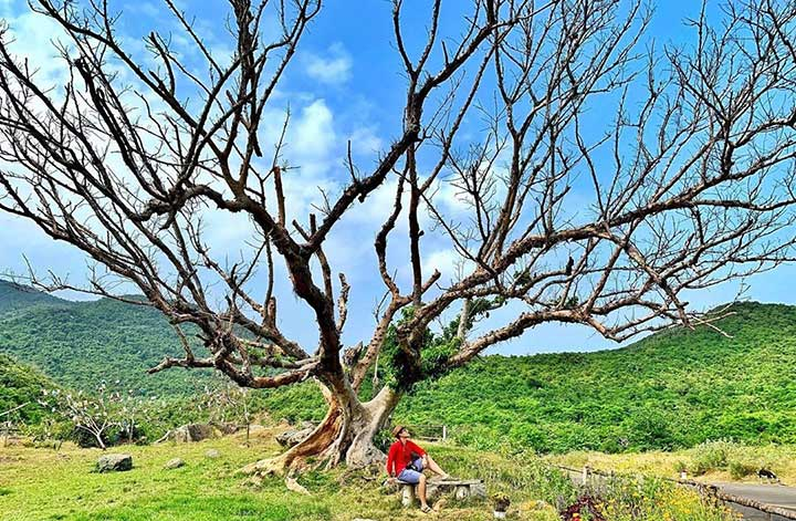 Địa Điểm Du Lịch Đẹp Ở Phú Yên