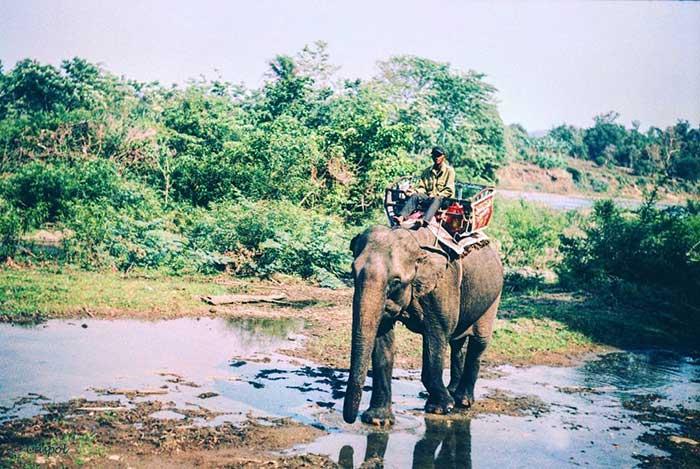 Du Lịch Vườn quốc gia Yok Đôn - Đắk Lắk